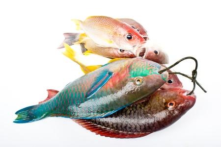 andaman fishes