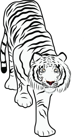 Hand drawn tiger vector Stock Vector - 19900966