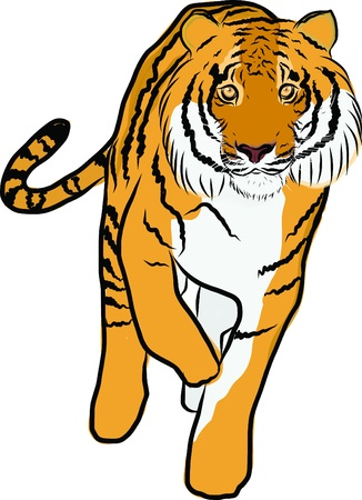 Hand drawn tiger vector Vector
