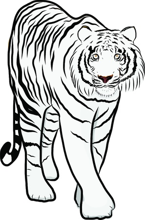 Hand drawn tiger vector Stock Vector - 19900967