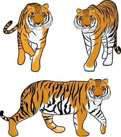 Hand drawn tiger vector Stock Vector - 19900969