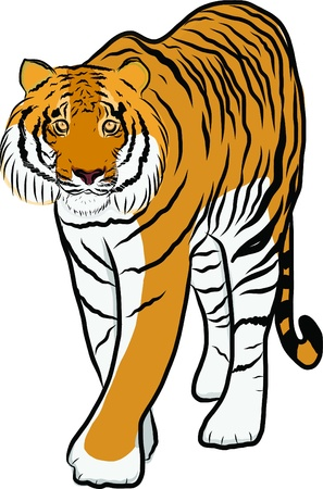 Hand drawn tiger vector Stock Vector - 19900961