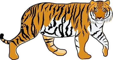 Main dessinée tigre vecteur Banque d'images - 19900963