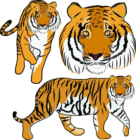 Hand drawn tiger vector Stock Vector - 19900968