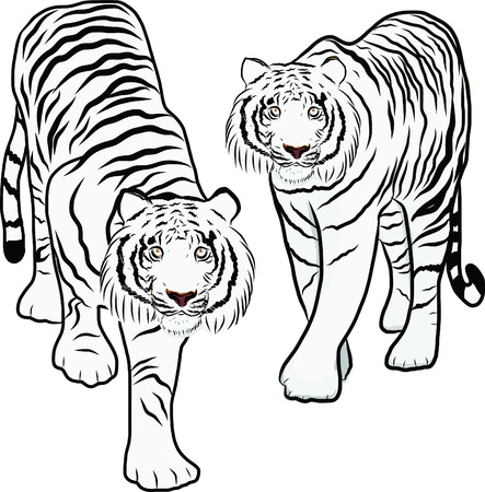 Hand drawn tiger vector Stock Vector - 19900971