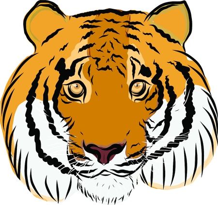 Hand drawn tiger vector Stock Vector - 19900959