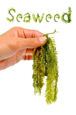 Seaweed is a loose colloquial term encompassing macroscopic, multicellular, benthic marine algae