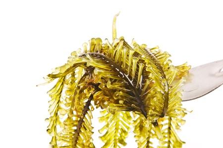 macroscopic: Seaweed is a loose colloquial term encompassing macroscopic, multicellular, benthic marine algae