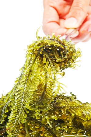 Seaweed is a loose colloquial term encompassing macroscopic, multicellular, benthic marine algae photo