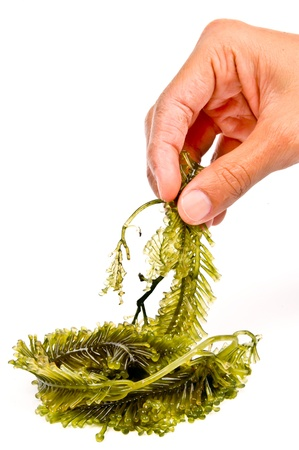 colloquial: Seaweed is a loose colloquial term encompassing macroscopic, multicellular, benthic marine algae