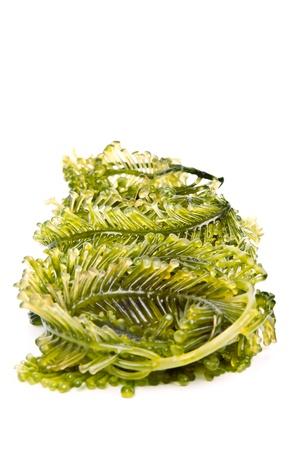 L'algue est un terme familier lâche englobant macroscopique, multicellulaire, algues marines benthiques Banque d'images - 19909537
