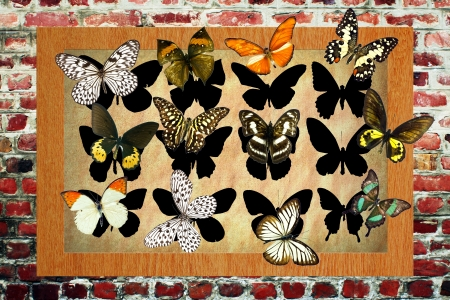 A butterfly is a mainly day-flying insect of the order Lepidoptera Stock Photo - 19917337