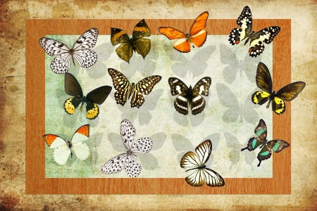 A butterfly is a mainly day-flying insect of the order Lepidoptera Stock Photo - 19917271
