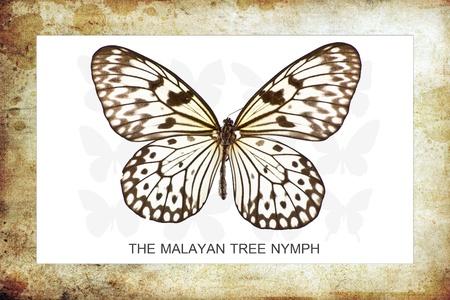 Un papillon est principalement un insecte de jour-vol des lépidoptères d'ordre Banque d'images