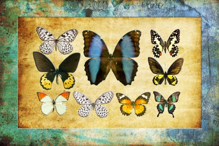 A butterfly is a mainly day-flying insect of the order Lepidoptera Stock Photo - 19917311