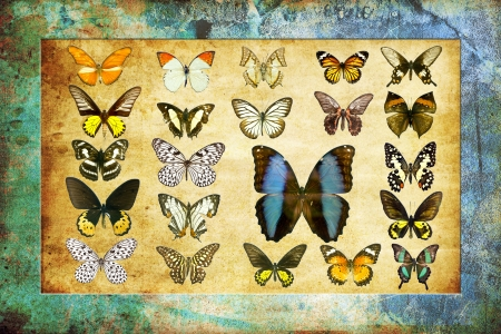 A butterfly is a mainly day-flying insect of the order Lepidoptera Stock Photo - 19917330