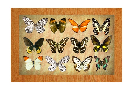 A butterfly is a mainly day-flying insect of the order Lepidoptera Stock Photo - 19917307