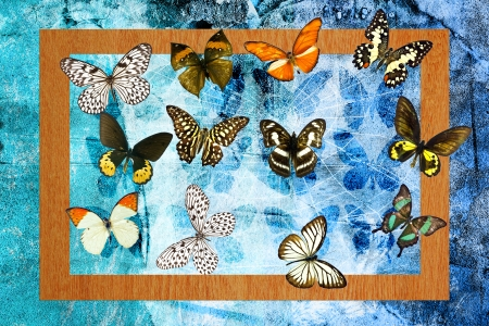 A butterfly is a mainly day-flying insect of the order Lepidoptera Stock Photo - 19917379