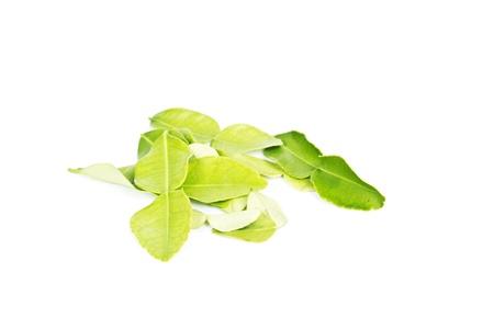 kaffir: kaffir leaves