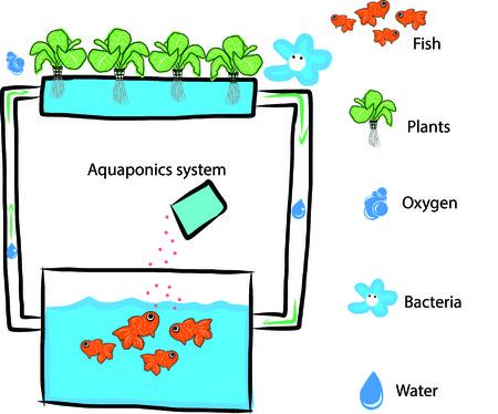 recirculate: Aquaponics system