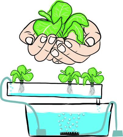 Système aquaponique Banque d'images - 34998069