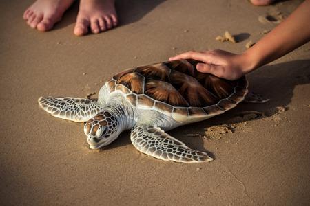 Sea Turtle Release photo