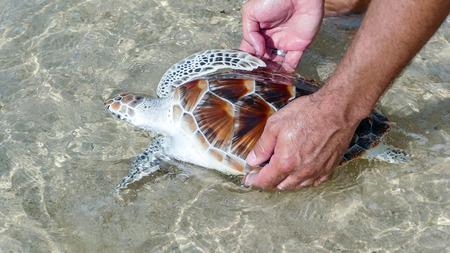 release: Sea Turtle Release