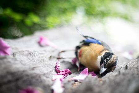 Le cycle de la vie, la mort, les oiseaux