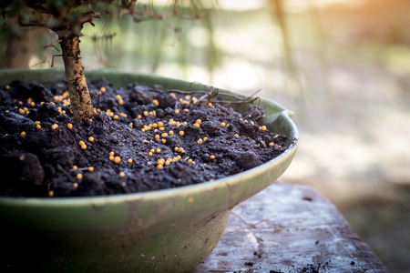 fertilizer on the bonsai pots Stock Photo