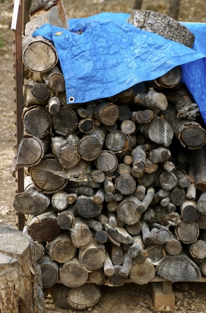 Log Wood Pile photo