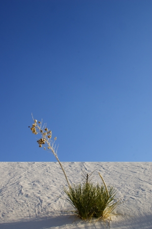 White Sands National Monument With Plant photo