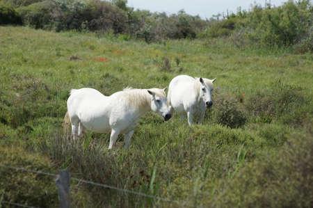 Wild horses. Standard-Bild