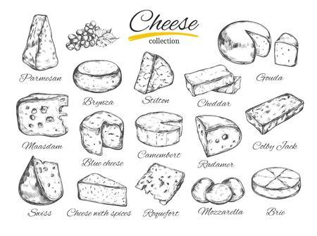 Vettore di raccolta di formaggio