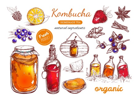 Kombucha homemade tea collection. Vector hand drawn illustration. Isolated objects on white