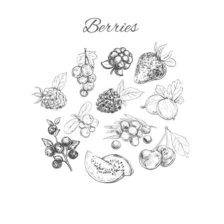 chicouté: Vector hand sketched set of berries. Isolated objects. Nature Illustration