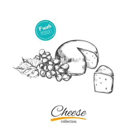 Cheese. vector hand drawn conceptual illustration. Sketch style