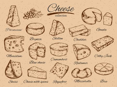 Cheese collection. Vector Hand drawn illustration of cheese types . Colorful. Isolated on white Ilustracja