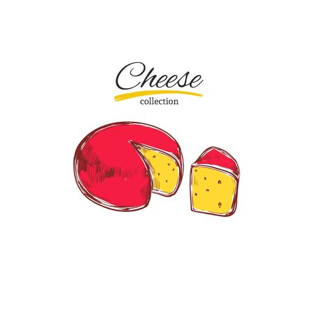 Hand drawn cheese collection isolated on white background