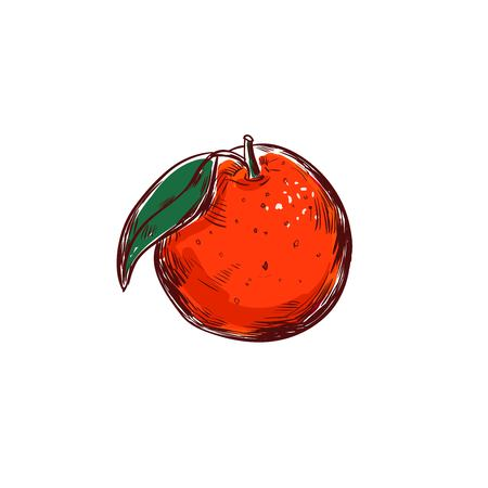 Orange vector hand drawn illustration. Isolated vector objects. Fruits illustration Illustration