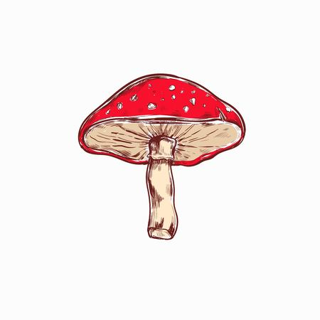 Amanita. Mushroom. Vector hand drawn colored illustration