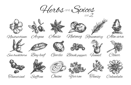 Herbs and spices collection.Vector hand drawn illustration. Isolated objects 向量圖像