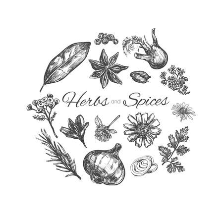 Collection d'herbes et d'épices. Illustration vectorielle dessinés à la main. Objets isolés