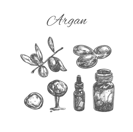 Argan. Hand drawn collection. Set of argan branches, leaves, nuts. For packing oil creams