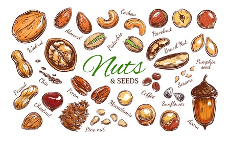 Nuts and seeds colorful collection