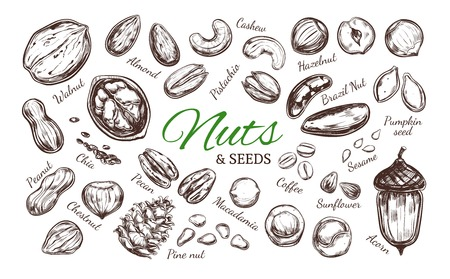 Nuts and seeds collection pattern design