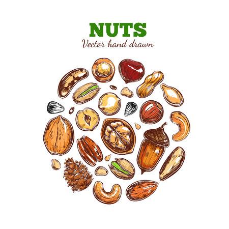 Colección de nueces y semillas. Foto de archivo - 91055826