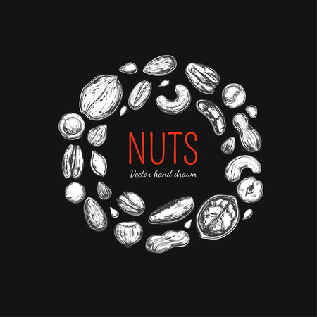 Nuts and seeds collection Vector illustration.