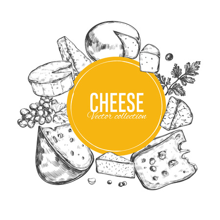 Cheese collection. Vector hand drawn illustration of cheese types