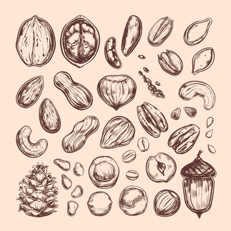 Nuts and seeds collection. Vector Hand drawn objects  Isolated on white. Modern brush pen Calligraphy.