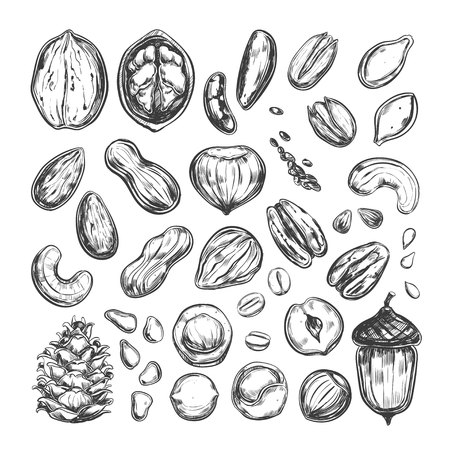 Nuts and seeds collection. Vector Hand drawn objects. Isolated on white. Modern brush pen Calligraphy.